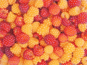 Salmonberries local wild food