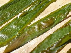 drying kelp LDSCN2572