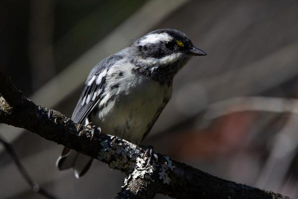 bird photography warbler nuthatch woodpecker